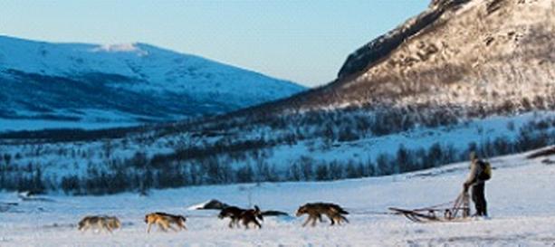 Kiruna-Hundspann