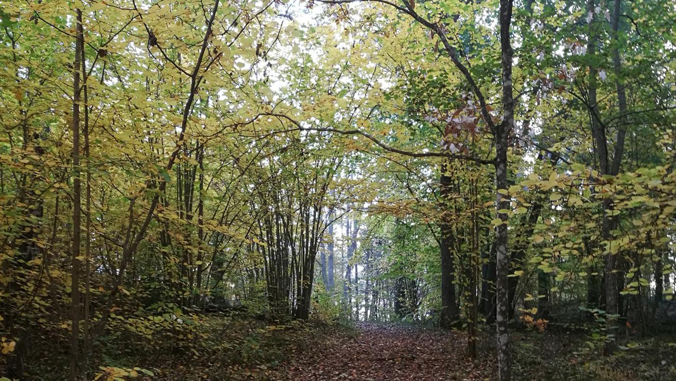 Naturreservat Tyresö