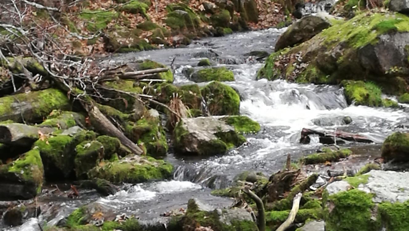 Njut av naturen Tyresö Nyfors