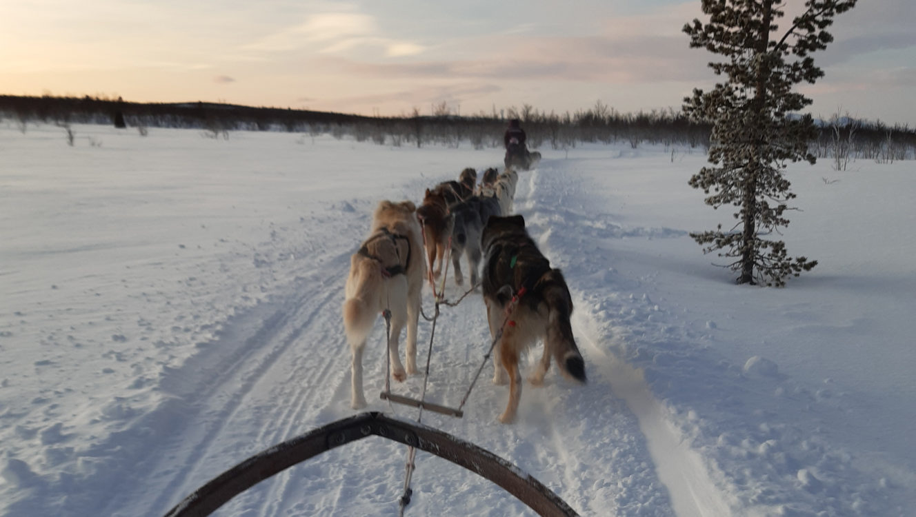 Hundspannstur Kiruna Sleddog Tours