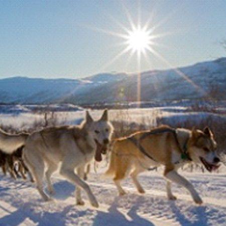 Yogaresa-Kiruna-Hundspann